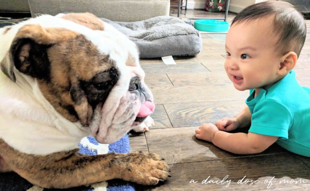 Tips on Getting Fur Baby Ready for Human Baby 1