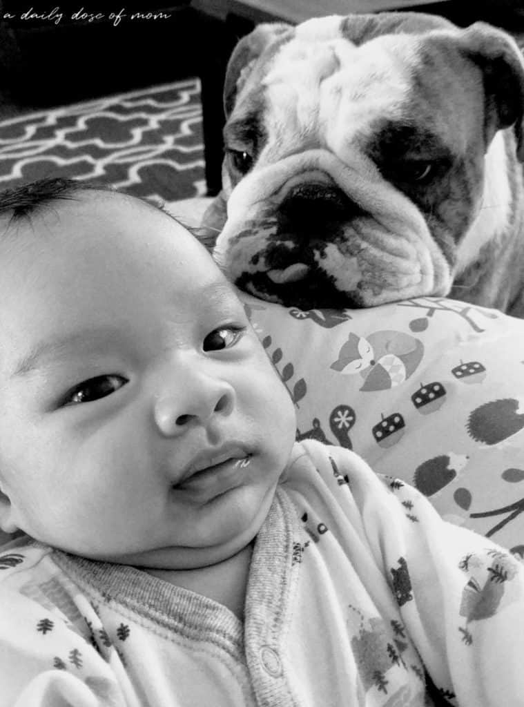 Tips on Getting Fur Baby Ready for Human Baby 5