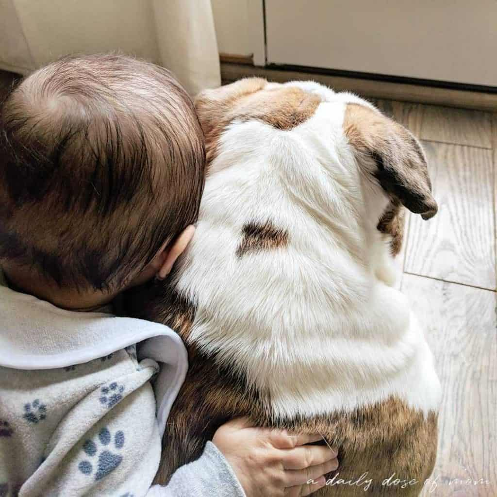 Tips on Getting Fur Baby Ready for Human Baby Featured