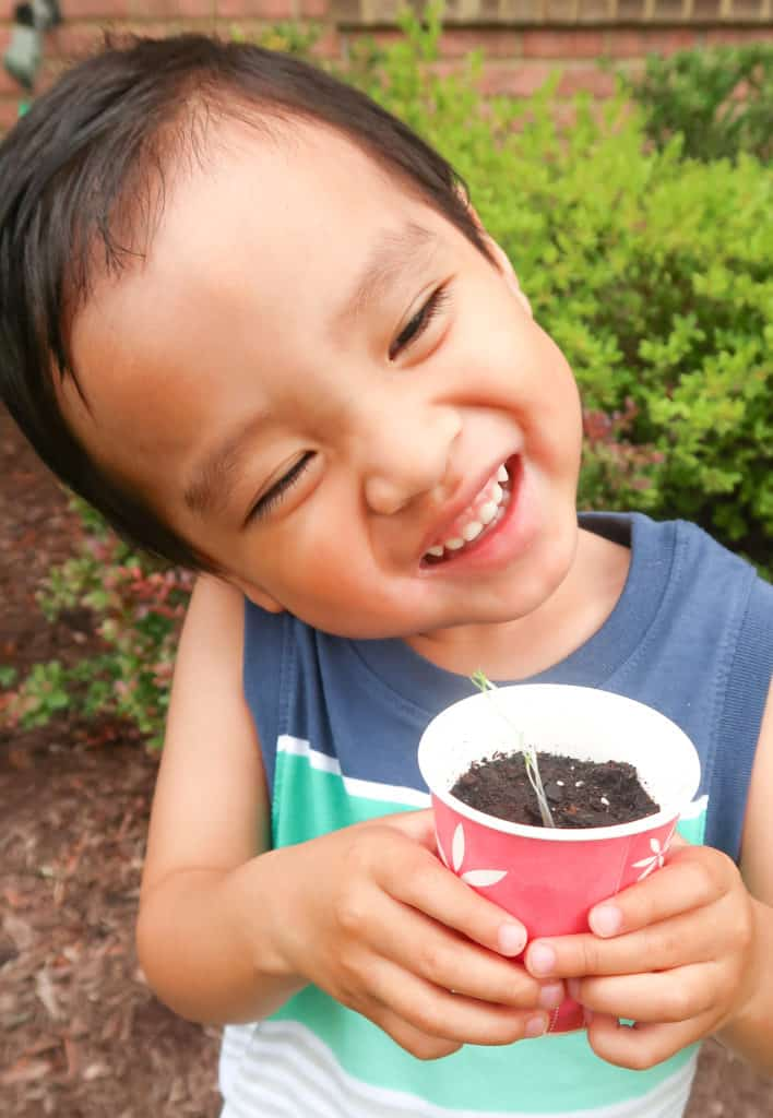 How to Make a Starter Garden with Your Toddler Dixie Cup Sprout