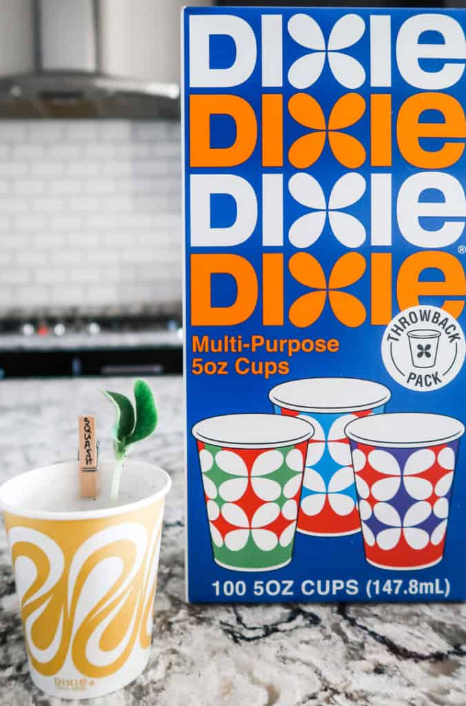 How to Make a Starter Garden with Your Toddler Dixie Cup Label