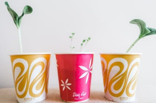 How to Make a Starter Garden with Your Toddler Dixie Cup Featured Image