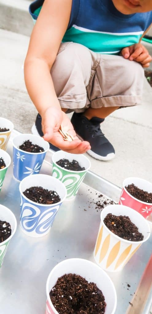 How to Make a Starter Garden with Your Toddler Dixie Cup Seeds